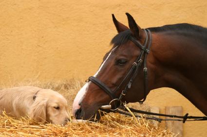Dogandhorse