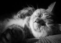 Catbwsleeping