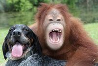 Orangblueticklaughing