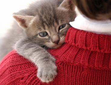 Kittenonshoulder-web