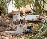 Catsinwoods