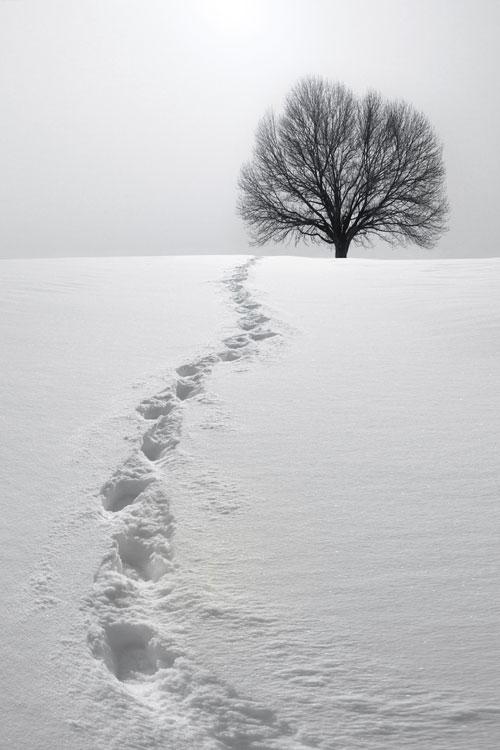 Snowandtree-web