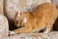 Catscratchcouch