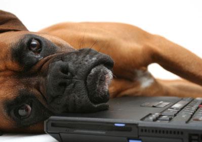 Dogheadoncomputer