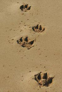 Pawprintsinsand-web