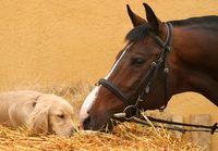 Horseanddogcr